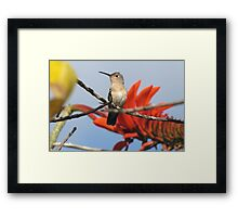 Buffy Hummingbird 1 Framed Print