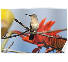 Buffy Hummingbird 1 Poster