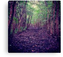 Down the Wooded Path Canvas Print
