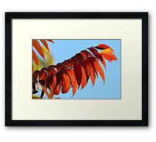 The Color of Autumn Framed Print