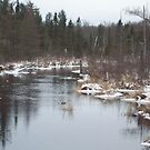 AuSable River Grayling MI by cdcantrell
