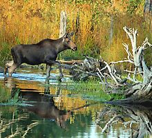 Maine Moose by Enola-Gay Wagner