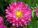 Pretty in Pink by FrankieCat