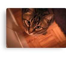 Tabby cat looking up Canvas Print