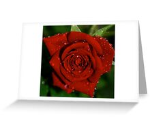 Flower reasons .... Greeting Card