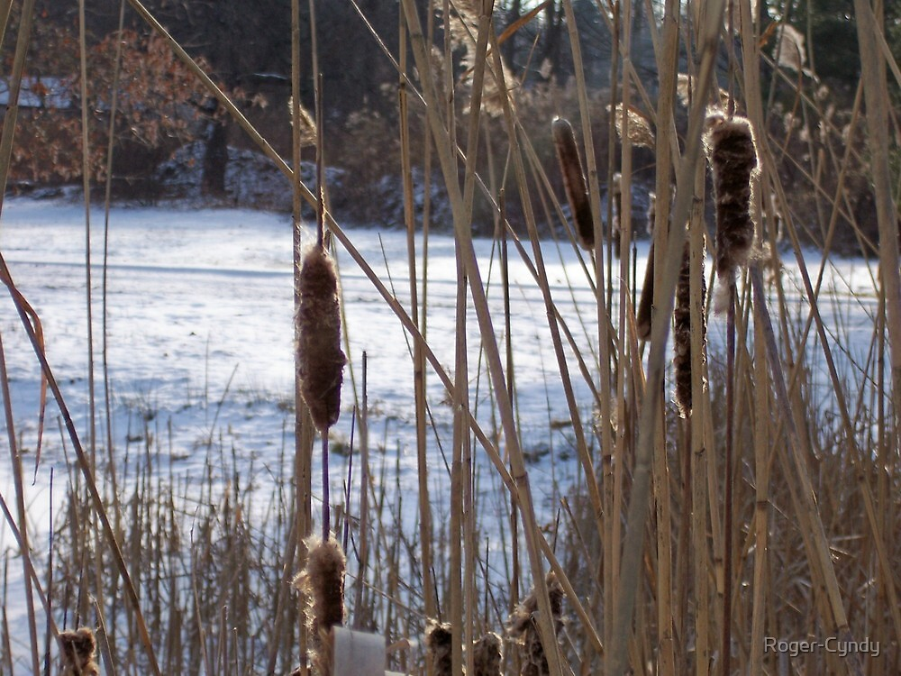 Cattails and snow by Roger-Cyndy