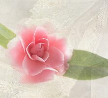 Rose and Lace by Susan Werby