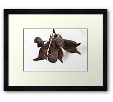 Suspended Pods Framed Print