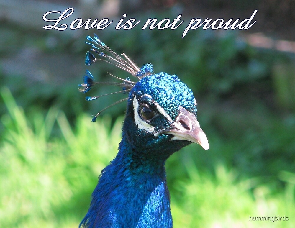Love is not proud by hummingbirds