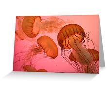 Jellyfish on Pink Greeting Card