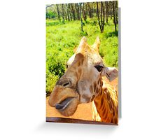 Giraffe portrait in Nairobi National Park - Kenya, Africa Greeting Card
