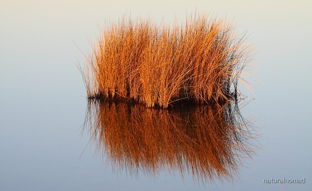 Reflected Grass by naturalnomad