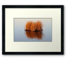 Reflected Grass Framed Print