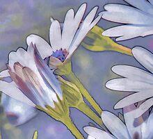 Daisies  by elenimac