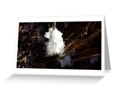 Frost Flower in Morning Greeting Card