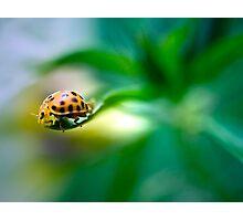 Living on the edge - ladybug on a leaf Photographic Print