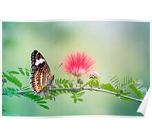 Sitting Pretty - butterfly  Poster