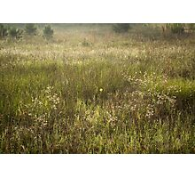 The Flower In The Meadow Photographic Print