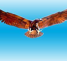 Alrewas Eagle by Paul  Green