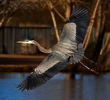 122610 Great Blue Heron by Marvin Collins