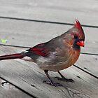 Lady Bird by TickerGirl