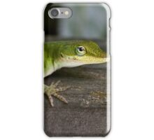 Young Green Anole iPhone Case/Skin