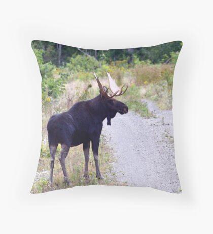 Bull Maine Moose Throw Pillow