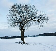 One lonely Tree by Elaine123