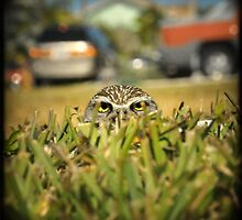 What you lookin'at ? by Catherine Ames