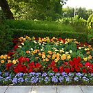 Colourful Flowerbed with Dahlias and Begonias by Kathryn Jones