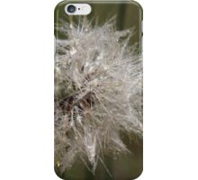 Dandelion shine iPhone Case/Skin