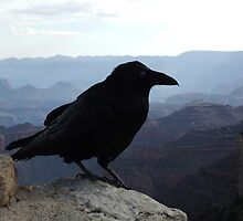 Raven over Grand Canyon dawn by leighroy