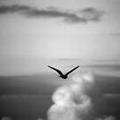 Noisy Bird by Mandy Kerr
