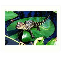 Gator on a Lily Pad Art Print