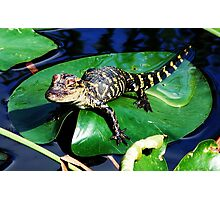 Gator on a Lily Pad Photographic Print
