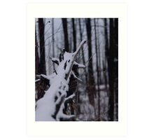 Snow in a Dead Forest Art Print