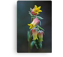 Cactus Bloom Canvas Print