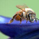 A Bee on Flower by loiteke