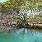 Mangrove Tree at Narooma by aussiebushstick