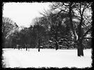 "Driveby Shooting #12: Black & White Winter in Waveny by Christine ""Xine"" Segalas"