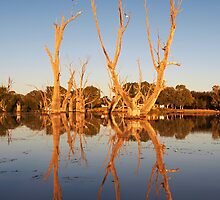 Murray River Billabong by Bill  Robinson