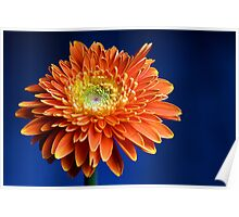 Flower w/ Blue Background II Poster
