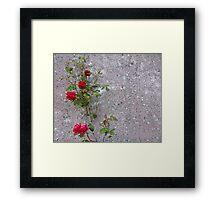 Red Roses On Grey Framed Print