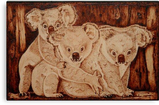 Three Baby Koalas by aussiebushstick