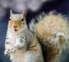 Grey squirrel by missmoneypenny