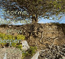 Storms Make Trees Grow Deeper Roots by MHen