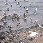 City Island Birds by Nancy Fred
