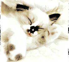 Sleepy Head by Shevaun  Shh!