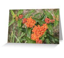 Wildflower: Orange Butterfly Weed Greeting Card
