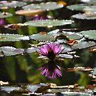 Water Lily  by Nancy Fred